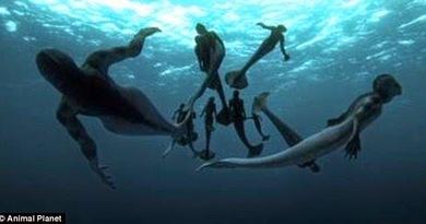 Sirene e altri pesci… d'aprile!